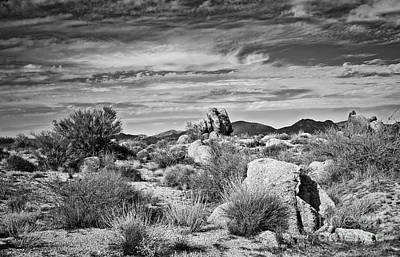 Photograph - Bountiful Sonoran  Desert In Black And White by Lee Craig