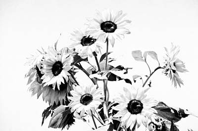 Photograph - Bouquet In Black And White by Emanuel Tanjala