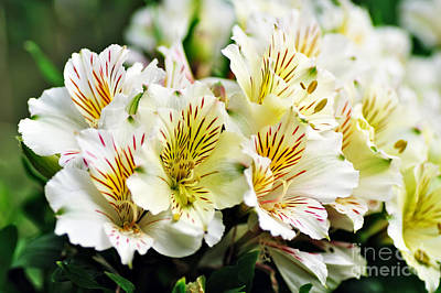 Bouquet Of Alstroemeria Art Print by Kaye Menner