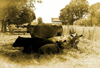 Photograph - Bovine Family by Erica Hanel