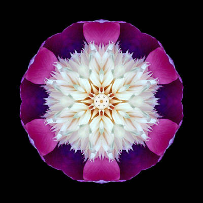 Photograph - Bowl Of Beauty Peony II Flower Mandala by David J Bookbinder