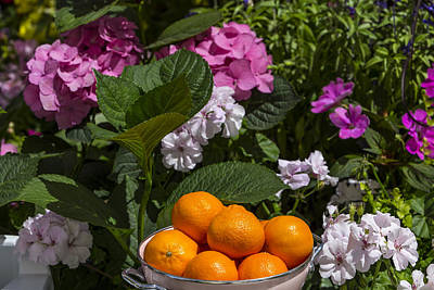 Garden Flowers Photograph - Bowl Of Oranges by Garry Gay
