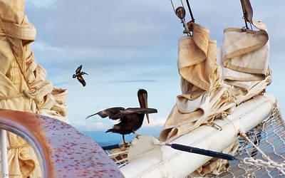 Photograph - Bowsprit Pelicans by Deborah Smith
