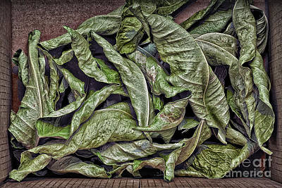 Photograph - Box Of Lemon Leaves by Walt Foegelle