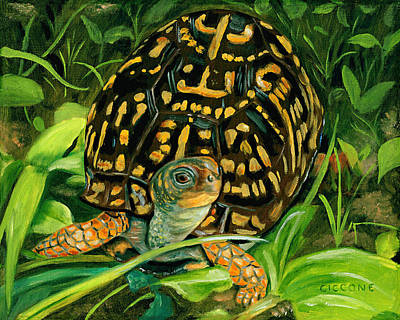 Box Turtle Art Print