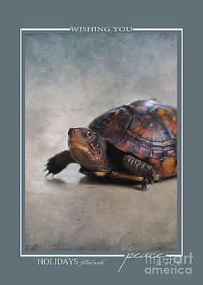 Photograph - Box Turtle Wildlife Christmas Cards by Jai Johnson