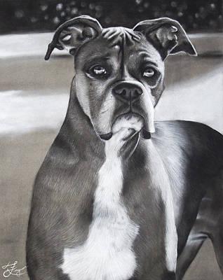 Boxer Dog Art Drawing - Boxer by Alaina Ferguson