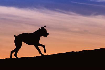 Boxer Dog Sunset Silhouette Art Print