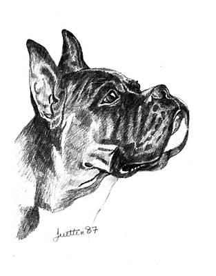 Brindle Drawing - Boxer Head Study by Barbara Lightner