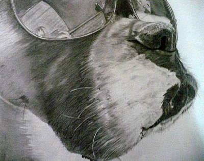 Boxer  Print by Kelly Brown
