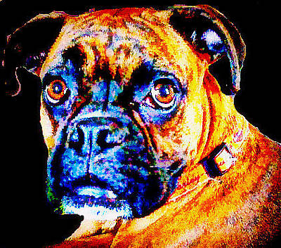 Photograph - Boxer by Kelly Dallas