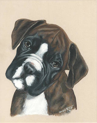 Boxer Puppy Painting - Boxer Puppy by Daniele Trottier
