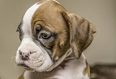Boxer Dog Digital Art - Boxer Puppy by Tony Moran