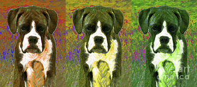 Boxer Puppy Digital Art - Boxer Three 20130126 by Wingsdomain Art and Photography