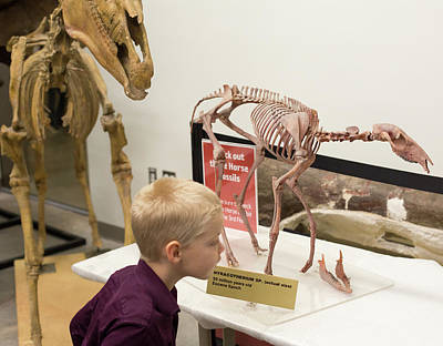 North American Wildlife Photograph - Boy With Ancestral Horse Fossil by Jim West