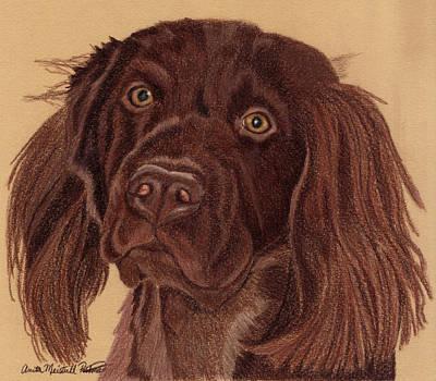 Boykin Spaniel Drawing - Boykin Spaniel Vignette by Anita Putman