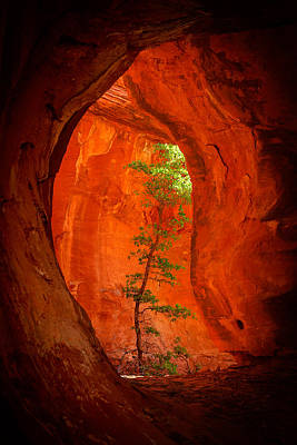 Warm Color Photograph - Boynton Canyon 04-343 by Scott McAllister