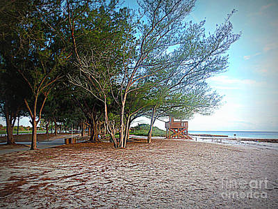 Photograph - Bradenton Beach  Pine Trees by Lou Ann Bagnall