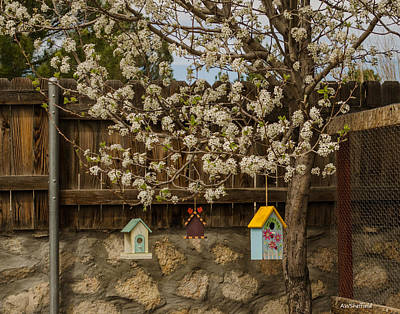 Photograph - Bradford Pear Tree 2 by Allen Sheffield