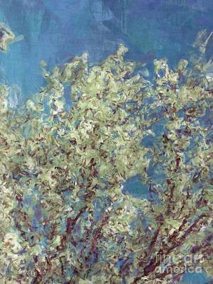 Photograph - Bradford Pear Tree by Donna Bentley