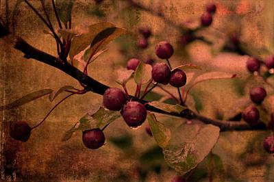 Bradford Pear Tree Seed Pods Art Print by Lesa Fine