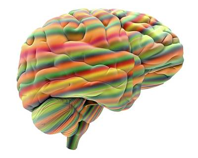 Brain Art Print by Alfred Pasieka
