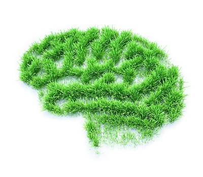 Human Brain Photograph - Brain Made From Grass by Andrzej Wojcicki