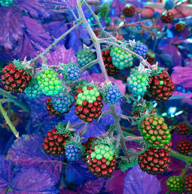Photograph - Brambles 2 by Laurie Tsemak