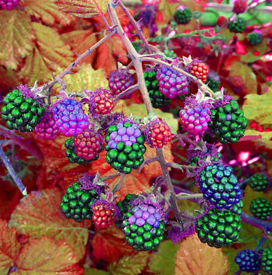 Photograph - Brambles 3 by Laurie Tsemak