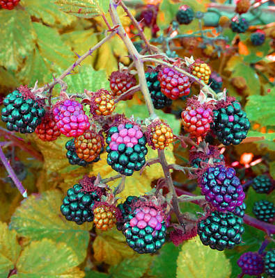 Photograph - Brambles by Laurie Tsemak