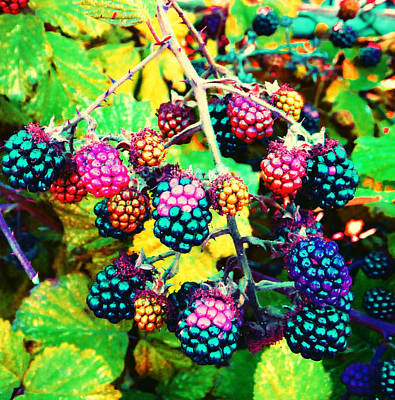 Photograph - Brambles Pop by Laurie Tsemak
