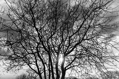 Photograph - Branches by Alfio Finocchiaro