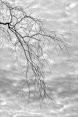 Branches And Clouds Art Print by Robert Ullmann
