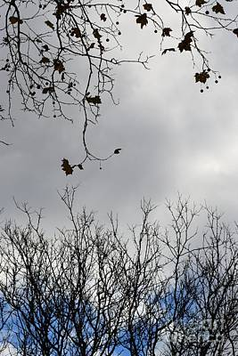 Photograph - Branches And Sky by Miriam Danar