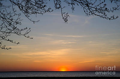 Photograph - Branches At Sunset by Kennerth and Birgitta Kullman
