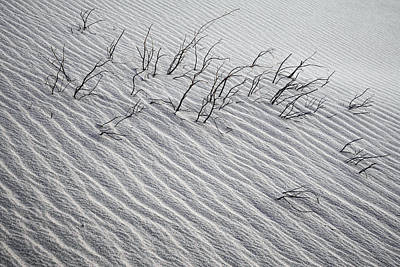 Death Valley Photograph - Branches In The Sand Death Valley Dunes by John Aydelotte