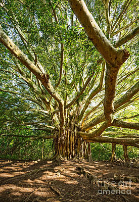Banyan Tree Photograph - Branches  by Jamie Pham