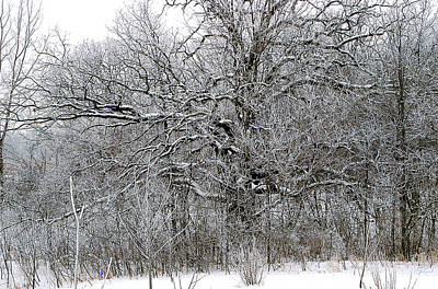 Photograph - Branches by Jon Lord