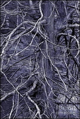 Photograph - Branches by Judi Bagwell