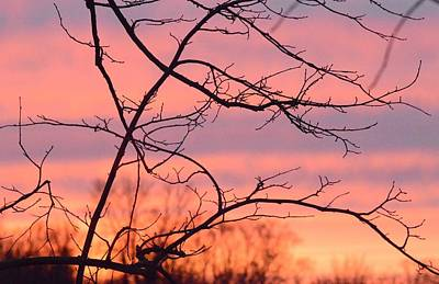 Art Print featuring the photograph Branches Meet The Sky by Dacia Doroff