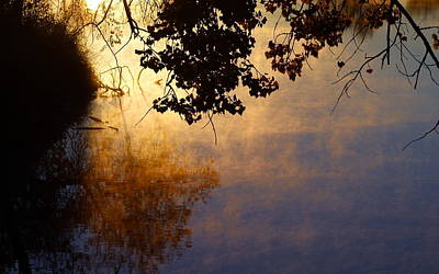 Mark Wagner Wall Art - Photograph - Branches Misty Pond Sunrise by Mark Wagner