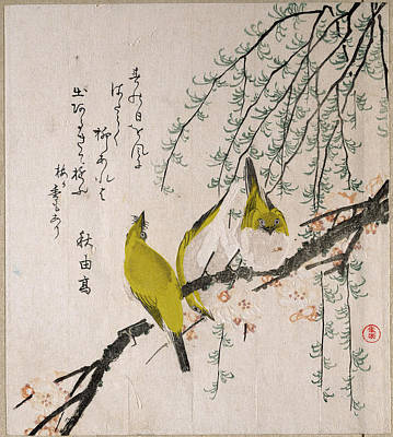 Plum Drawing - Branches Of Plum Tree And Willow With Japanese White-eyes by Kubo Shunman