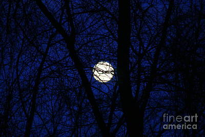 Branches To The Moon Art Print by Neal Eslinger