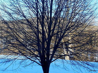 Photograph - Reduced Branches by Wild Thing