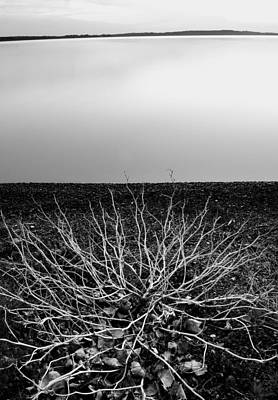 Photograph - Branching Out by Brian Duram