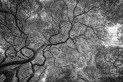 Branching Out Bw Original