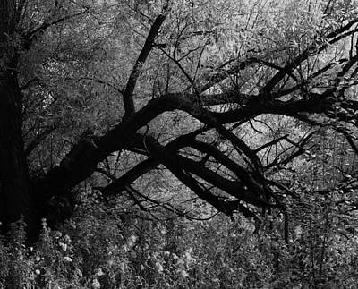 Photograph - Branching Out by David Pantuso