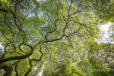 Branching Out  Original