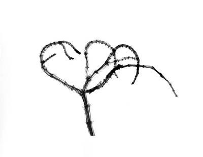 Branching Plant Stem Art Print by Albert Koetsier X-ray