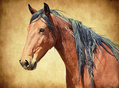 Photograph - Branded Wild Horse by Steve McKinzie